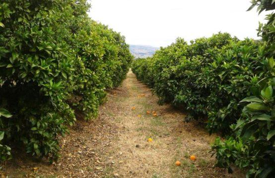propriété agricole Bragança